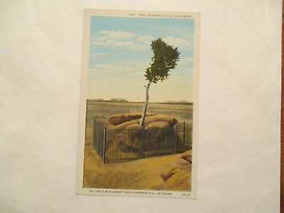 tree growing out solid rock Sherman hill Wyoming WY Postcard