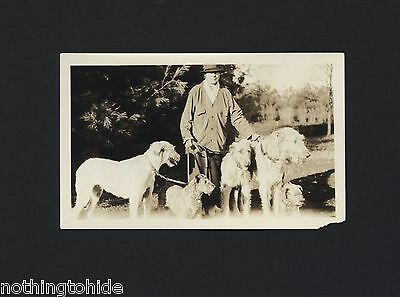 Irish Wolfhounds and Terrier Dog Go For a Walk - Circa 1930 Photograph