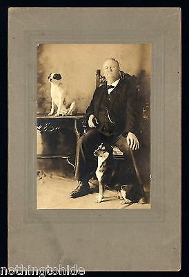 Two Terrier Dogs Pose With Their Master - Cabinet Photo Circa 1900