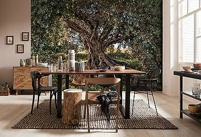 HUGE Wall Mural Photo Wallpaper OLIVE TREE Living Room Decor 368x254cm NG