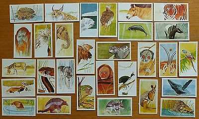 Vanishing Wildlife - Brooke Bond Cards - Incomplete Set (29 of 40)