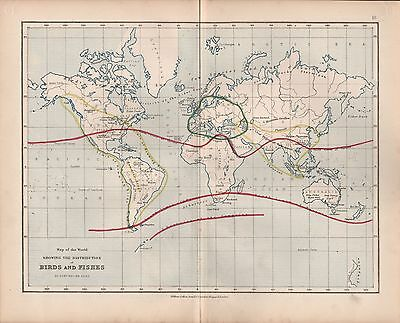 1875 Ca ANTIQUE MAP - WORLD: DISTRIBUTION OF BIRDS AND FISHES