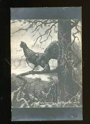 127778 HUNT Capercaillie by MULLER Vintage Russian PC