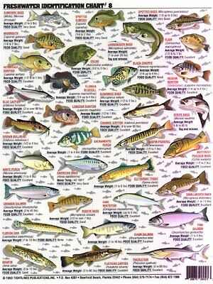 Fishermans Freshwater Fish Chart #8