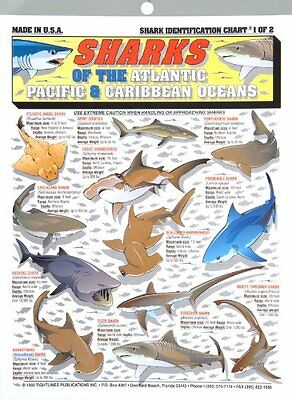 Fishermans Shark Identification Chart #1