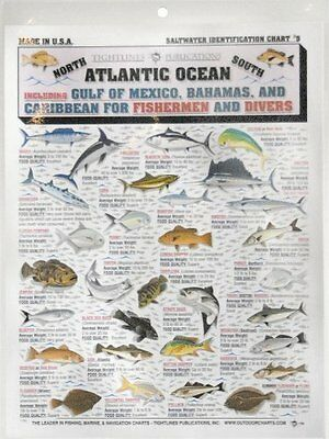 Fishermans Saltwater Fish Chart #5