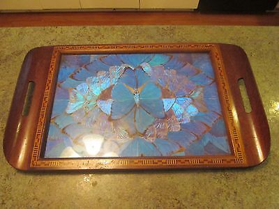 Vintage BLUE BUTTERFLY WING ART INLAID WOOD SERVING TRAY BRAZIL Mid Century