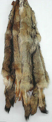 Tanned Coyote Fur Head Tail Paws Skin Pelt