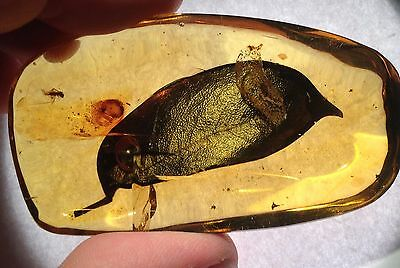 A101 DR50Group958grams 1st Quality Fossils Authentic Dominican Amber