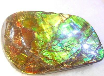 Large Ammonite Display Gem Grade Ammolite 110 x 60 mm