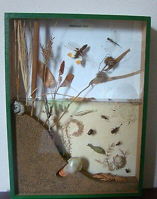 Very Rare Real Animal Taxidermy In Box Vitrine  Cross Section Of River