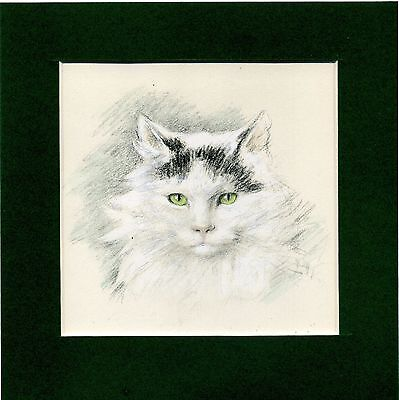 Lucy Dawson ~ Cat ~ Hand Coloured Print. Genuine Vintage 1946