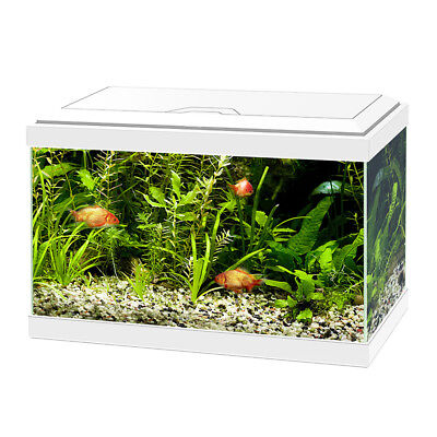 Askoll Acquario Ciano 20 Light White Bianco 17 Litri Completo Accessoriato