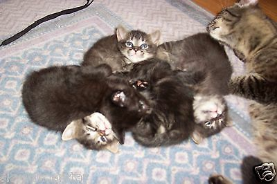 Mom Cat And Litter$ Of Kittens Photo Benefits Feral Cat Rescue 100% Donation