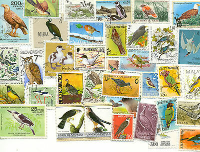 Birds-1500 all different stamps collection mainly medium/large-off paper