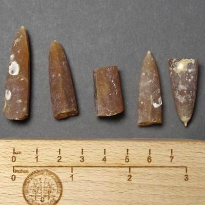 W914- Cretaceous Belemnites Set - 5. Fossils From Poland