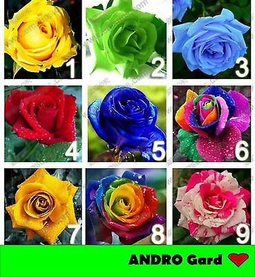 NEW 9 colors 450 rose seeds (50 seeds each color)