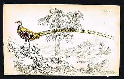 1843 Antique Print - Barred-Tailed Pheasant of China, Hand-Colored Engraving