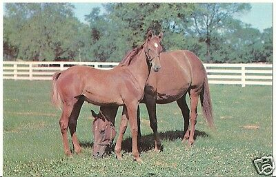 Original Vintage 1950s-60s Horse PC- Two Horses in Middle of Field- White Fence