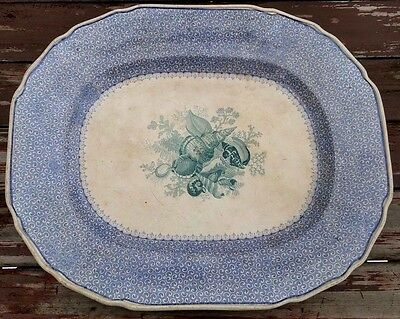 Thomas Dimmock - Conchology - Rare Antique Transferware Platter - 18 3/8""
