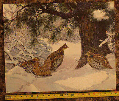 ORIGINAL PRINT A LASSELL RIPLEY VINTAGE LITHOGRAPH - Ruffed Grouse in Snow
