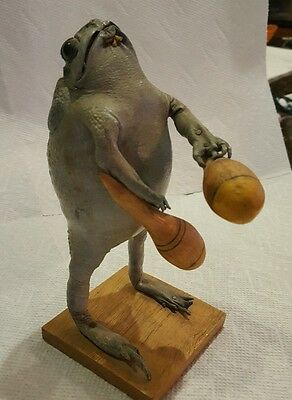 Real Vintage Taxidermy Frog Playing The Maracas - Amazing Condition