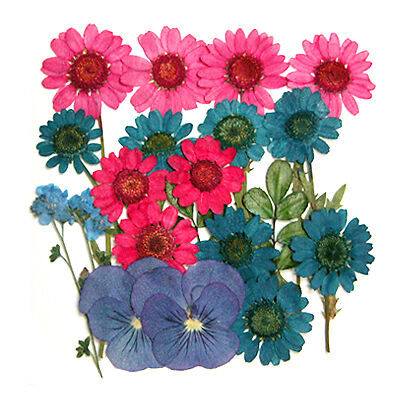 Pressed flowers, daisy, pansy, forget me not