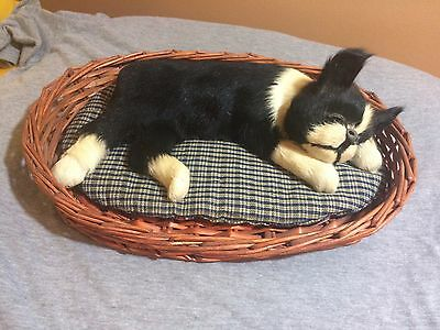 Vintage Boston Terrier Realistic Like Laying In Basket Sleeping