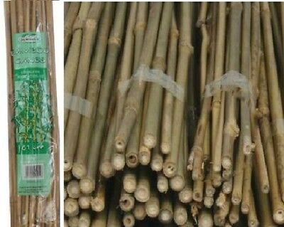 Pack of 40 Natural Bamboo Garden Canes Flower Plant Strong Support Canes - 2ft