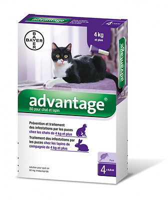 Bayer Advantage 80 Chat/Lapin 4-10 kg 4 pipettes antiparasitaires
