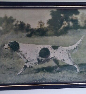 English Setter, Framed Print, 1902, Hunting Dog Portrait