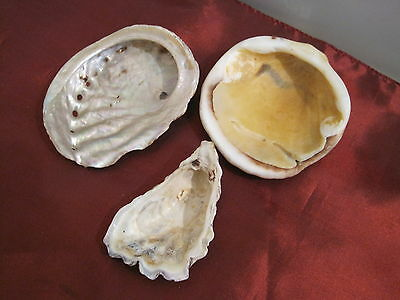 Vintage 3 beautiful shells 1 natural abalone mother of pearl interior