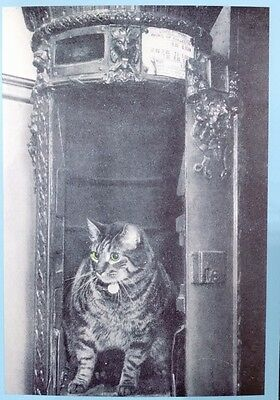 Postal Cats  'tibs' Postal Museum Postcard From Collection L13
