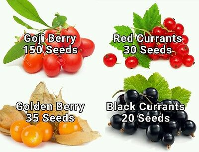 Goji Berry Seeds + Golden Berry Seeds + Red Currant Seeds + Black Currant Seeds