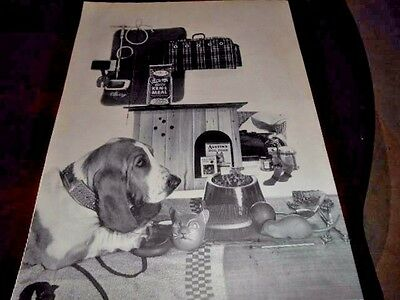 1957 Full Page Basset Hound Picture