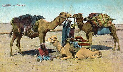 EGYPT - CAIRO - OLD POSTCARD CIRCA 1900's - CAMELS