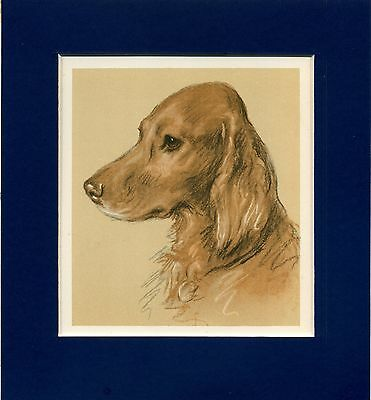 Lucy Dawson  ~ Irish Setter ~  Colour Print Genuine Vintage 1939