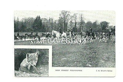 Hampshire:  Hunting : New Forest Foxhounds - Old Postcard