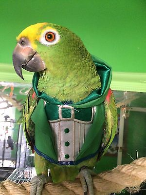 Parrot Hooded Tuxedo IRELAND theme mega cute Easy on sizes Petite to Large