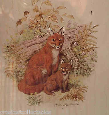 Vintage Or Antique Foxes Print By J.crosby -Smith