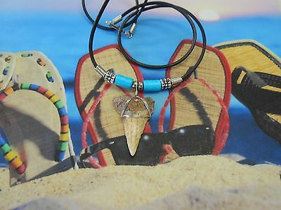 """1 3/8"""" Chilean Fossil Great White Shark Tooth Necklace, Beachwear, Sharks Teeth"""