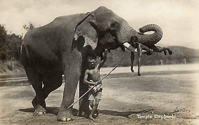 CEYLON - OLD POSTCARD CIRCA 1930's - TEMPLE ELEPHANT