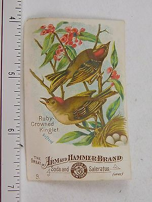 Arm & Hammer Soda Saleratus No.9 Ruby-Crowned Kinglet F54