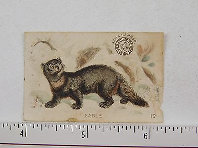 Arm & Hammer Soda Interesting Animals Series No.19 Sable F54