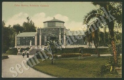 Palm House, Adelaide Gardens ~Vintage Postcard