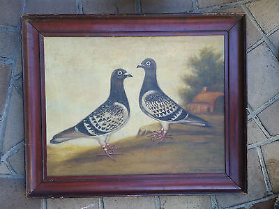 Vintage Oil Painting Of French Racing Pigeons Antique Portrait