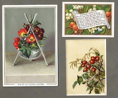 3 VICTORIAN FLOWER BERRIES Birthday CHRISTMAS 1880's Greeting Cards