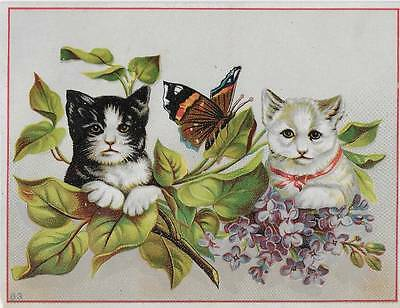 VICTORIAN ADVERTISING CARD ~ TWO CATS and a BUTTERFLY, NO. 83