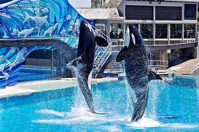 SeaWorld San Diego 3900+ Photo DVD, + bonus marineland Shamu photos cd Sea World