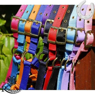 Rhinegold Adjustable Headcollar – Foal – Small Pony – 11 Colours Available